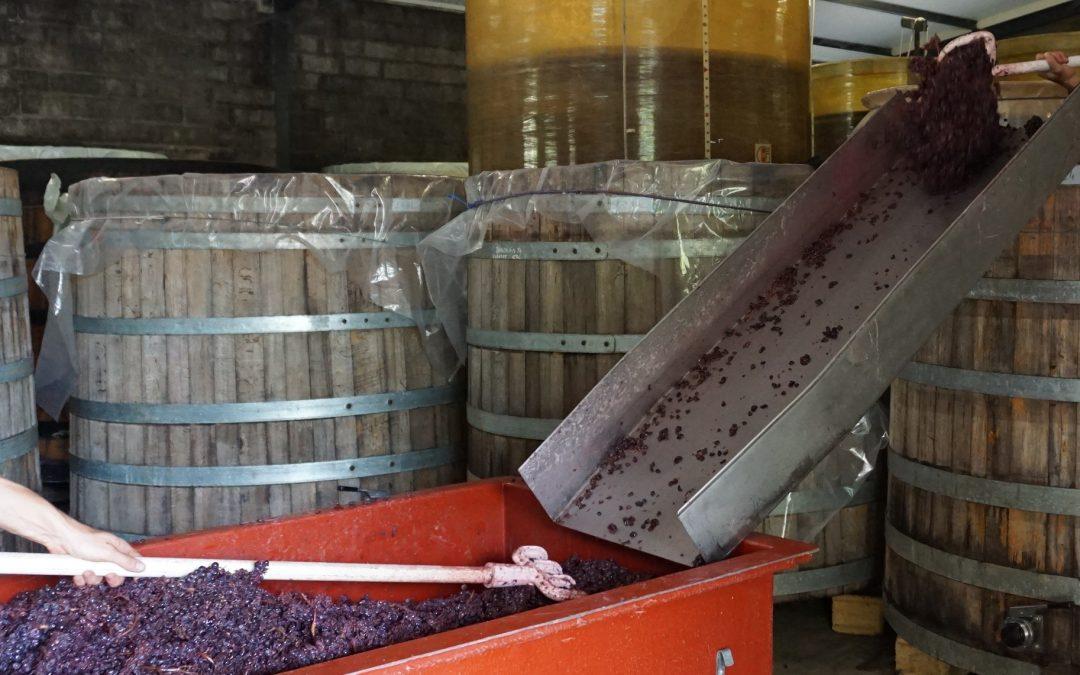 Décuvage des vins rouges